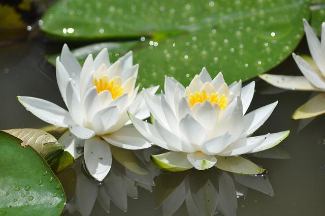 Plants, Flowers, Leaf, Nature, Garden