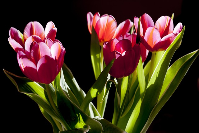 Tulips, Flowers, Plant, Beauty, Green, Posy