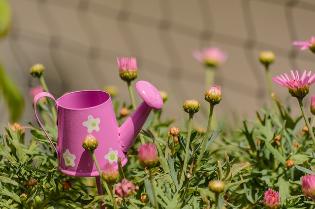 Flowers, Watering Can, Casting, Pot, Water, Plant