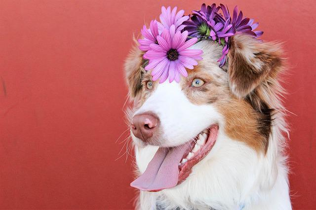 Flowers, Dogs, Red, Purple, Spring, Summer, Animal, Pet