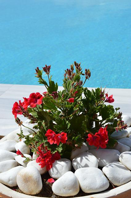 Geranium, Flowers, Flower Bowl, Planting, Red