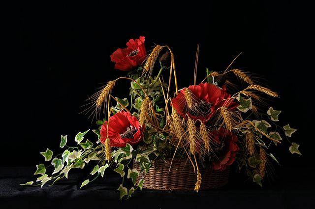 Poppy, Flowers, Wheat, Red, Campaign, Nature