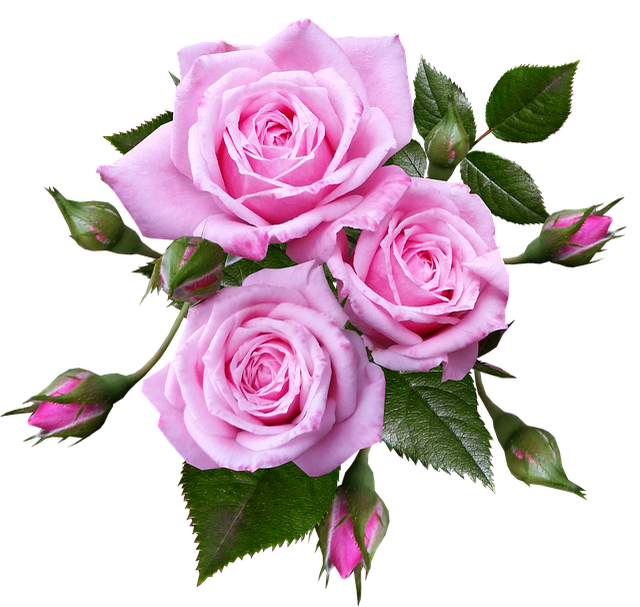 Roses, Miniature, Flowers, Romantic