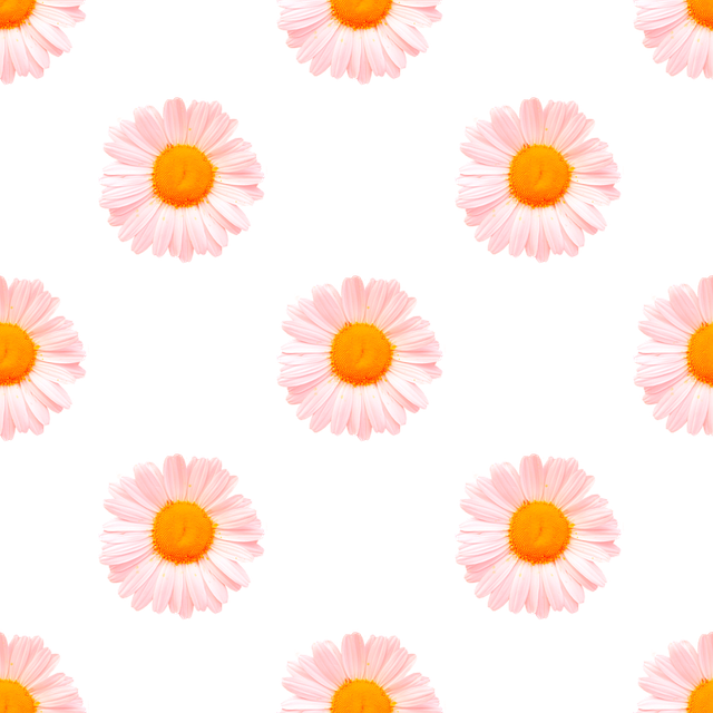 Seamless, Daisies, Flowers, Plants, Alpha, Transparency