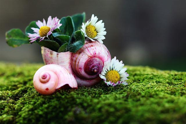 Daisy, Shell, Nature, Moss, Close Up, Flowers, Flora