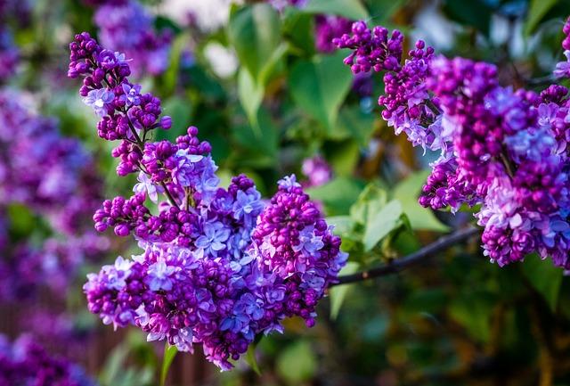 Flower, Nature, Plant, Flowers, Garden, Spring, Shoots