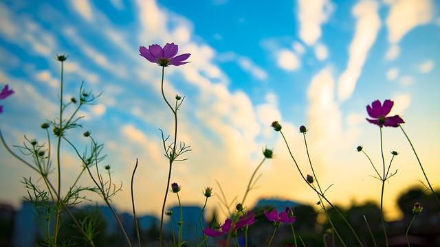 Sunset, Flowers, Silhouette, Blue Sky