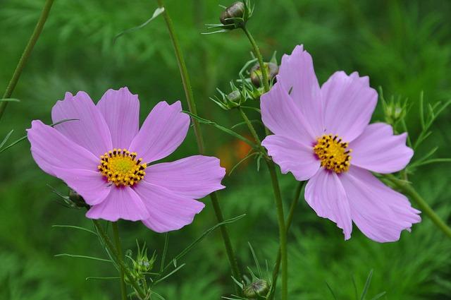 Flowers, Flower, Spring