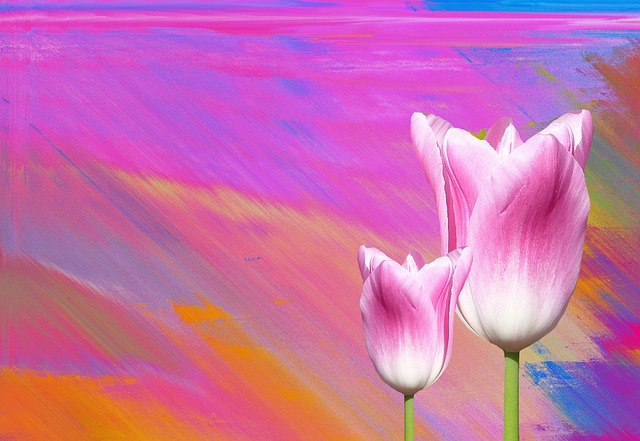 Spring, Tulips, Nature, Flower, Flowers, Pink