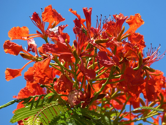 Tree, Nature, Flowers, Garden, Spring, Tropics