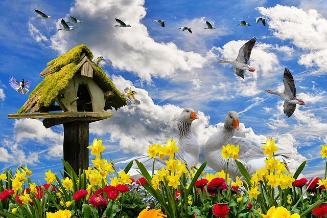 Nature, Spring, Flowers, Spring Flowers, Narcissus