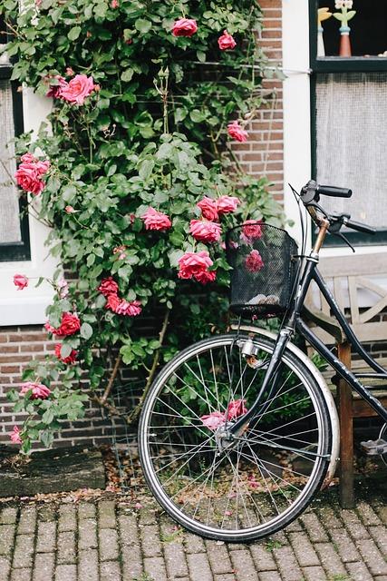 Amsterdam, Bike, Holland, Flowers, Roses, Street