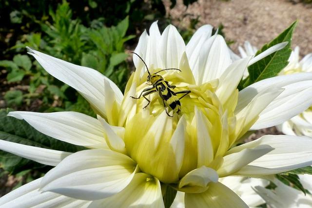 Nature, Flower, Plant, Summer, Flowers, Close, Beetle