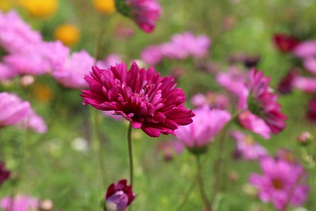 Flower, Flower Meadow, Summer, Flowers, Flora, Nature