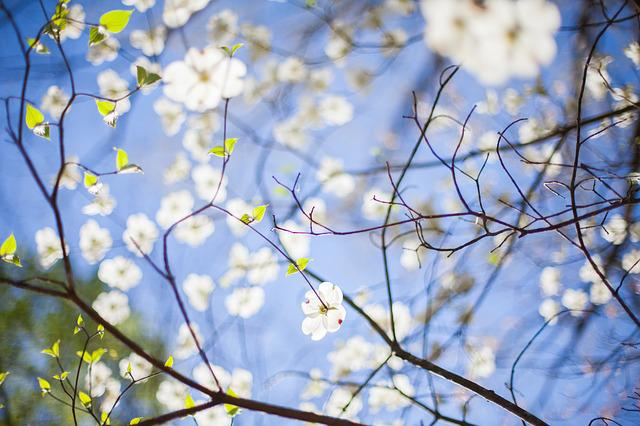 Branches, Flora, Flowers, Tree