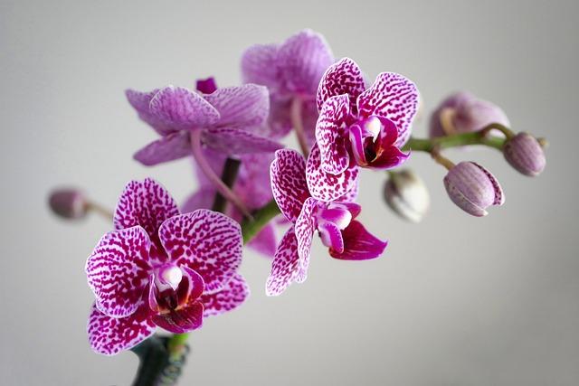 Plant, Flower, Nature, Flowers, Petal, Floral, Tropical