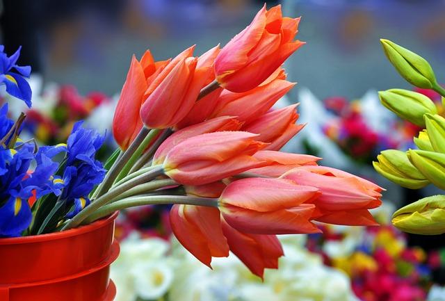 Saturday Market, Tulips, Flowers