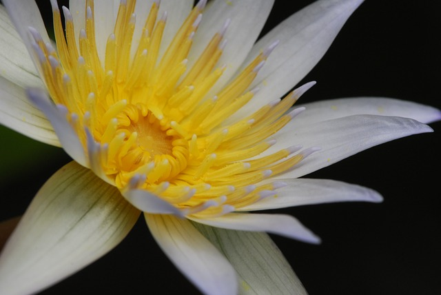 Flower, Plant, Flowers, Nature, Garden, Water Lily
