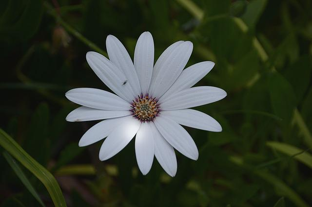 Flowers, Insect, Marguerite, Nature, White Flower