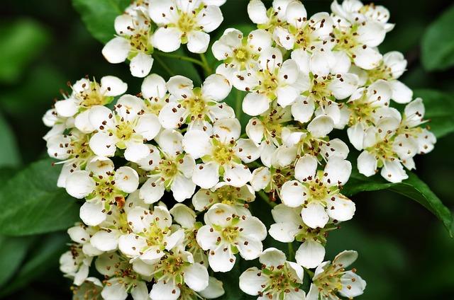 Flowers, White Flowers