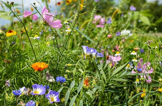 Flower Meadow, Wildflowers, Summer Meadow, Flowers