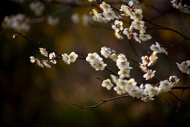 Flowers, Cherry Tree, Wood, Plum, Plum Flower