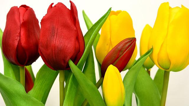 Tulips, Flowers, Artificial, Spring, Red, Yellow