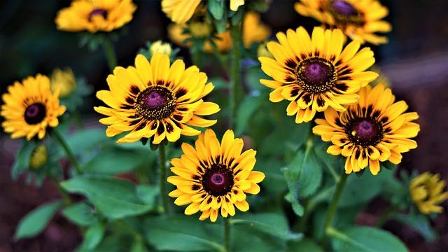 Coneflower, Flowers, Yellow, Bright, Nature, Flora