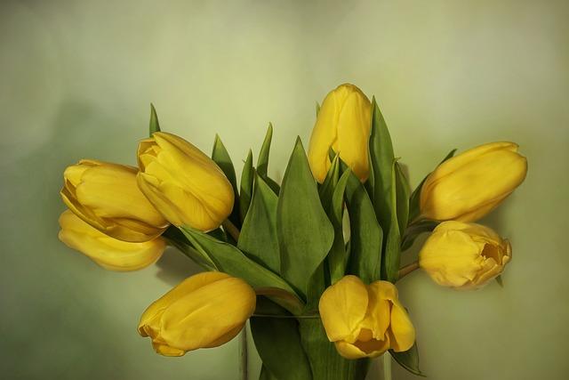 Nature, Flowers, Spring, Yellow, Tulips, Tulipa, Lily