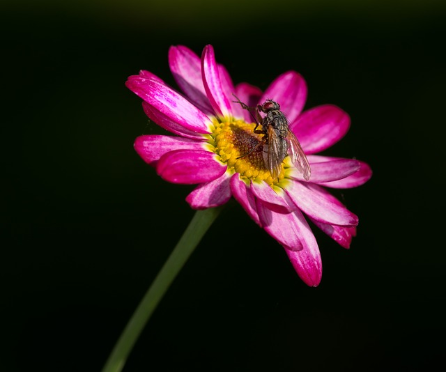 Flue, Flower, Pink, Insect