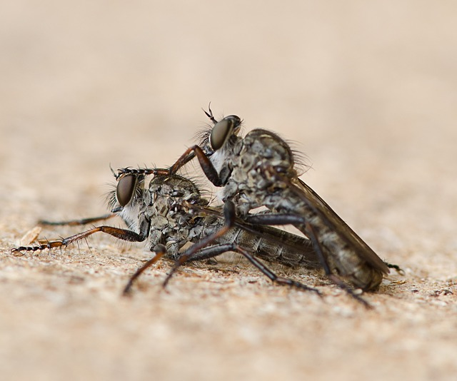 Flue, Insect, Macro