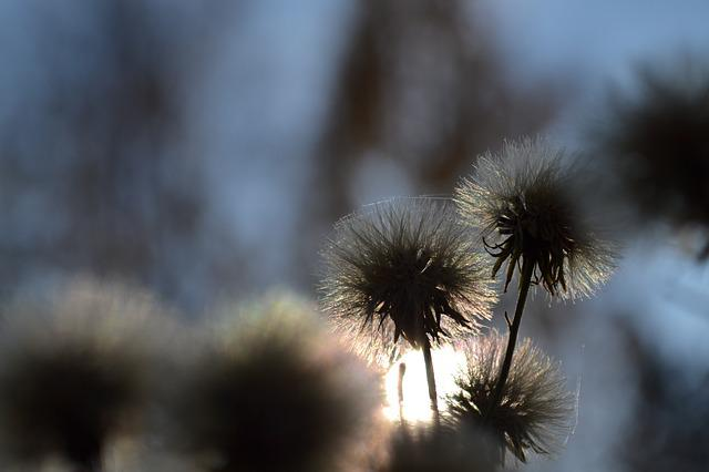 No Person, Nature, Outdoor, Plant, Fluffy, Summer