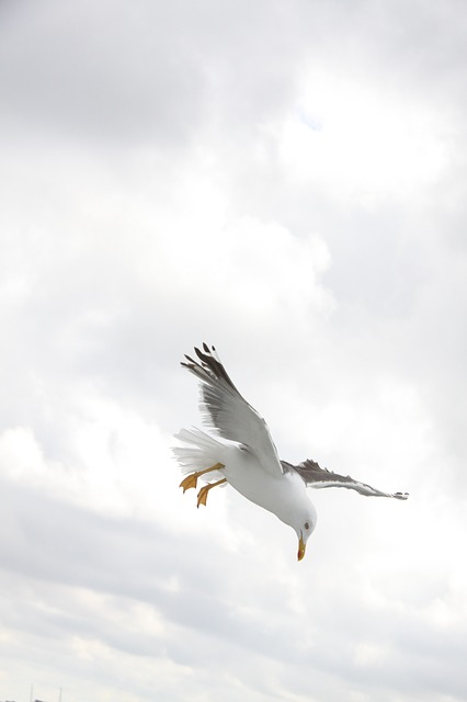 Seagull, Bird, Wings, Fly, Nature