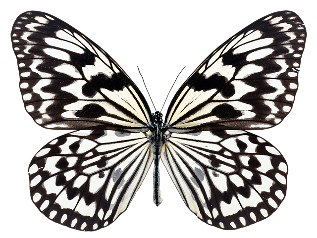 Butterfly, Fly, Nature