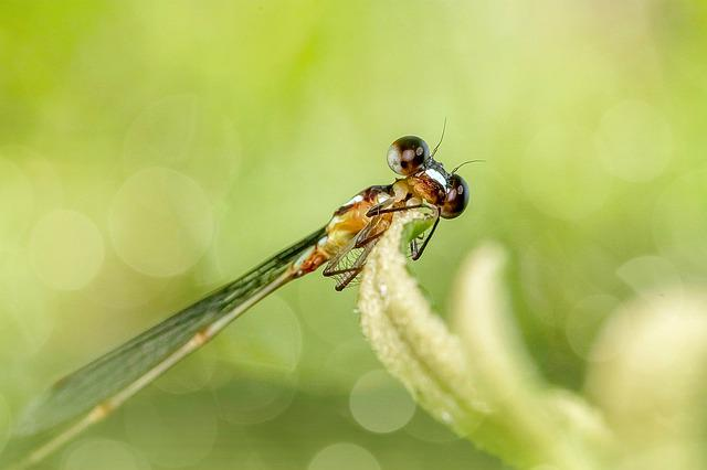 Insect, Nature, Dragonfly, Damselfly, Outdoors, Fly