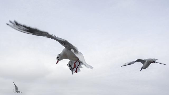 Gulls, Bird, Sea, Fly, Venice, Water Bird, Birds