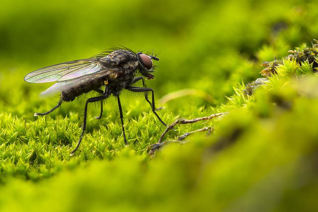 Fly, Blowfly, Insect, Compound Eyes, Hair, Green, Moss