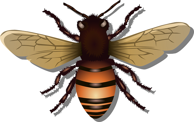Honeybee, Bee, Insect, Fly, Honey, Nature, Beehive, Bug