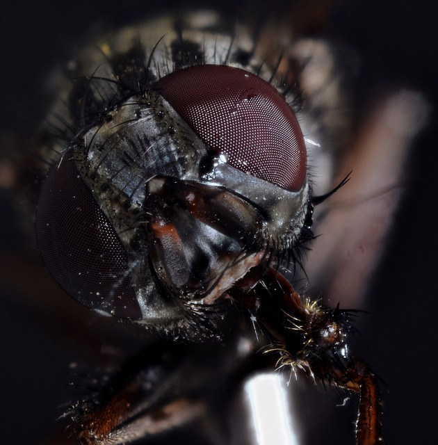 Housefly, Compound, Fly, Macro, Close Up, Insect