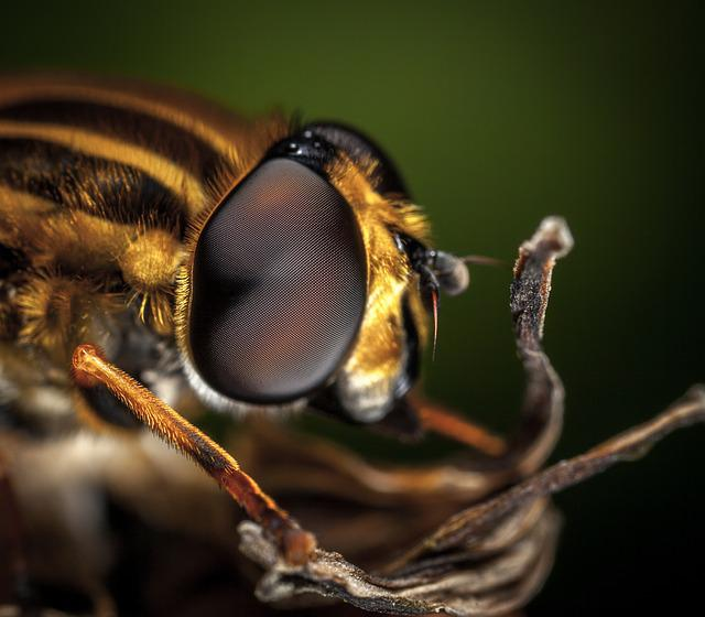 Insect, Fly, Nature, Living Nature, Eye, Macro
