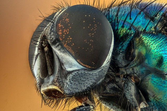 Macro, Insect, Green, Eyes, Nature, Fly, Yellow, Hairy