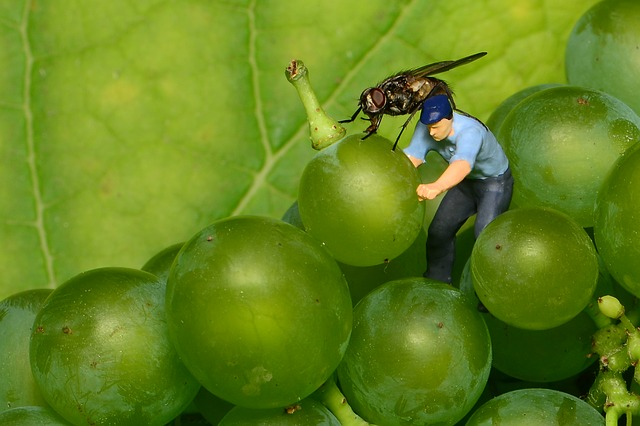 Tiny People, Mini People, Grapes, Fly, Green Grapes