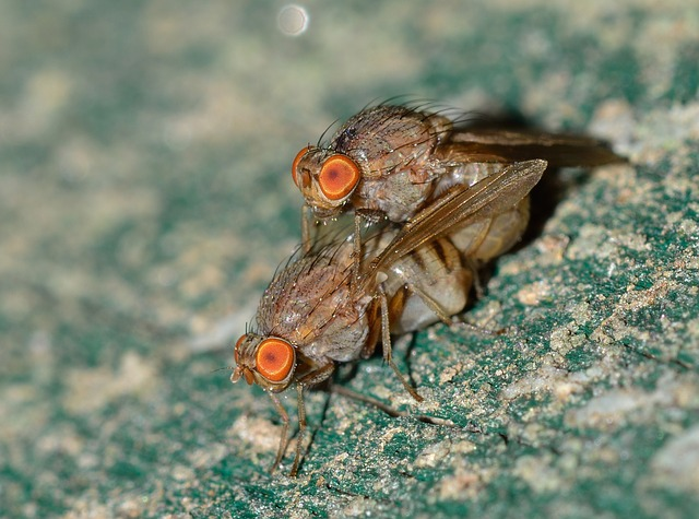 Nature, Insects, Moscow, Coupling, Fly