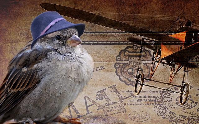 Sparrow, Bird, Fly, Fly Away, Travel, Nostalgic