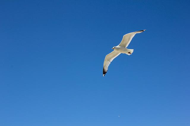 Borkum, Seagull In Flight, Sky, Bird, Fly, North Sea