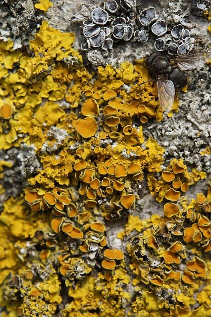 Log, Bark, Tree Bark, Fouling, Fly, Weave, Yellow, Tree