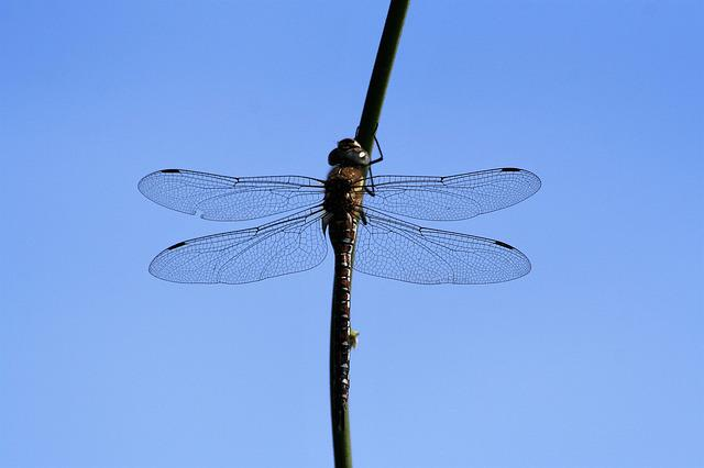 Dragonfly, Insect, Wing, Fly, Nature