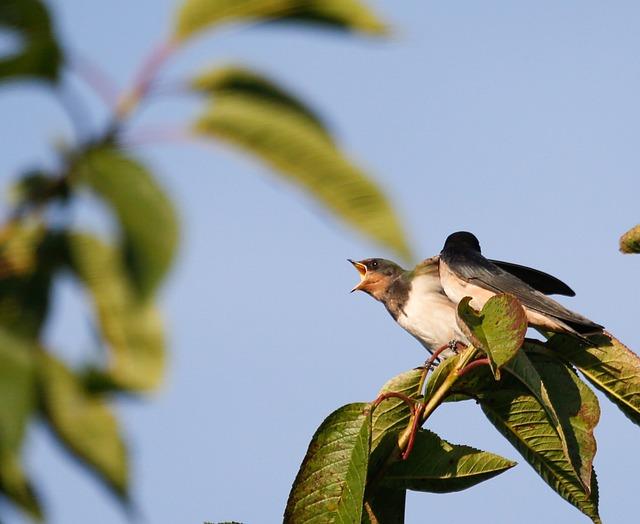 Bird, Barn Swallow, Nature, Martin, Flying, Bill, Small
