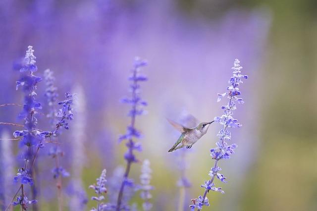 Hummingbird, Flight, Flowers, Flying Bird