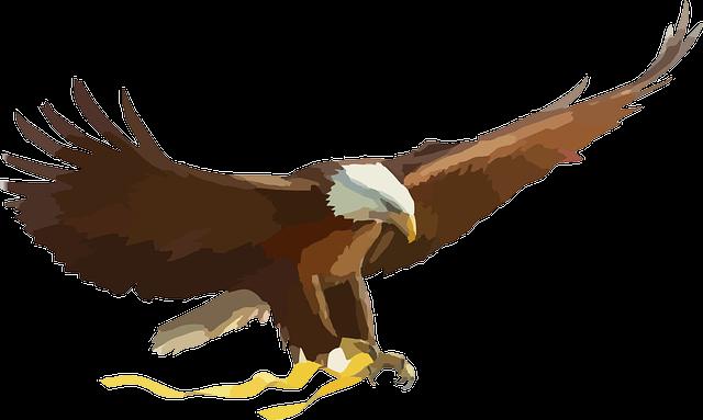 Bald Eagle, Eagle, Bird Of Prey, Raptor, Flying